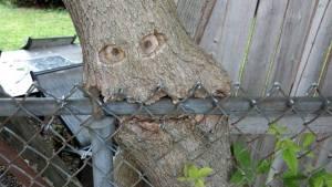 treeeats