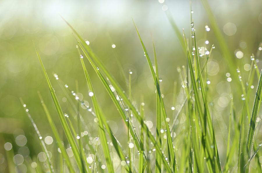 dew-on-grass-janet-rockburn