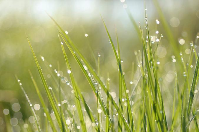 dew-on-grass-janet-rockburn